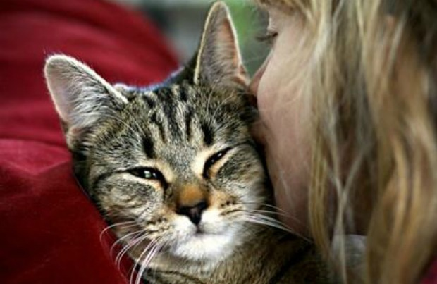 Do Cats Really Have Emotions For Humans?