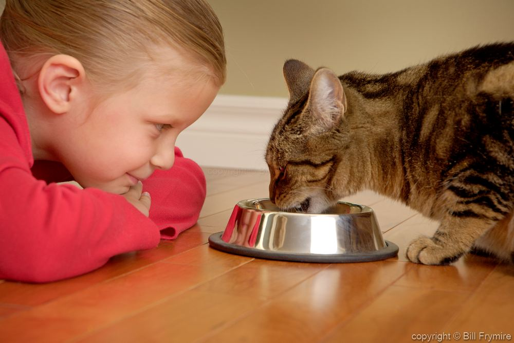 How Should Cats Be Fed?