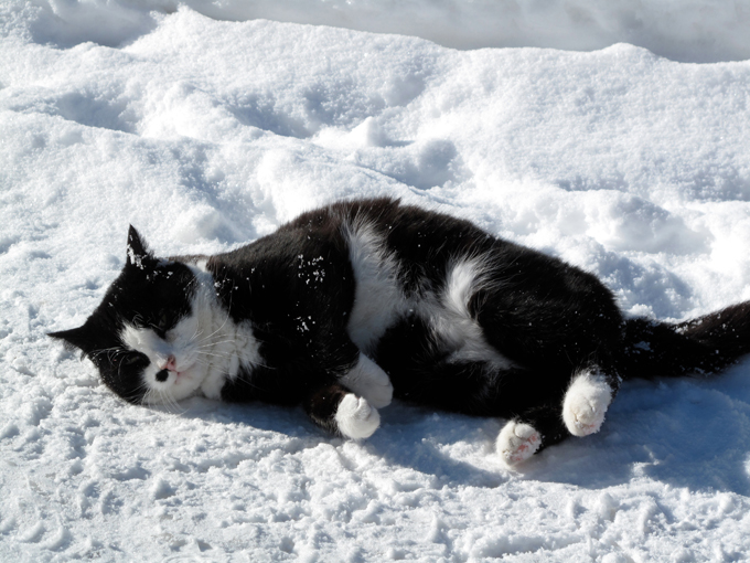Protecting cats from winter and cold weathers. Protecting cats by dressing them up with good and thick cat dresses. Don't let cats get cold.